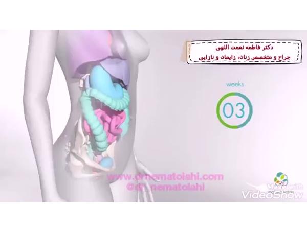چگونه بدن هنگام حاملگی تغییر می کند؟